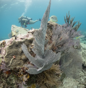 Elbow Reef, Key Largo, FL United States, © 2015 Bob Hahn, E-M1 OLYMPUS M.8mm F1.8 at 8 mm, ISO: ISO 800 Exposure: 1/125@f/6.3