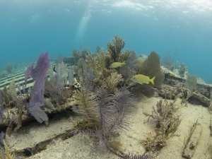 Elbow Reef, Key Largo, FL United States, © 2015 Bob Hahn, E-M1 OLYMPUS M.8mm F1.8 at 8 mm, ISO: ISO 800 Exposure: 1/125@f/8