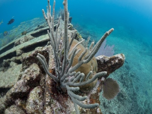 Elbow Reef, Key Largo, FL United States, © 2015 Bob Hahn, E-M1 OLYMPUS M.8mm F1.8 at 8 mm, ISO: ISO 800 Exposure: 1/125@f/7.1
