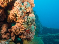 Jane C Wreck, Oranjestad, Aruba, © 2016 Bob Hahn, OLYMPUS M.12-40mm F2.8 at 14 mm, ISO: ISO 400 Exposure: 1/80@f/8