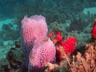Bali Reef, Oranjestad, Aruba, © 2016 Bob Hahn, OLYMPUS M.12-40mm F2.8 at 36 mm, ISO: ISO 400 Exposure: 1/160@f/9