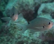 The Fingers Reef, Oranjestad, , Aruba, © 2016 Bob Hahn, OLYMPUS M.60mm F2.8 Macro at 60 mm, ISO: ISO 200 Exposure: 1/160@f/8